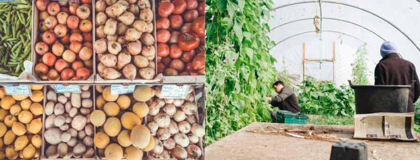 N°1 > Agriculture - Alimentation