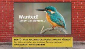 #ProtectWater : non à l'affaiblissement du droit européen sur l'eau !