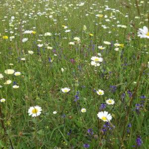 #5 - Jours d'après, préservons la biodiversité