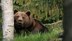 L'ours, la démocratie et la justice